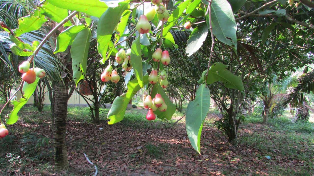 orchard-fruit-farm-bungalow-015